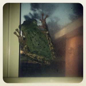 Frodo Frog