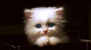 cat7[1]